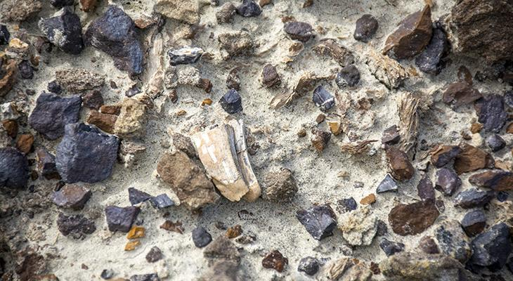 fossil_on_ground